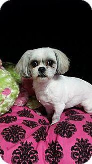 Lhasa Apso Mix Dog for adoption in Urbana, Ohio - Sophie
