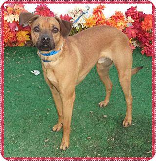 Beagle Mix Dog for adoption in Marietta, Georgia - ROCKY