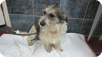 Terrier (Unknown Type, Medium) Mix Puppy for adoption in Bartonsville, Pennsylvania - Sadie
