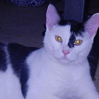 Adopt A Pet :: Jock - Holden, MO