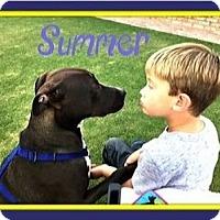 Adopt A Pet :: Sweet Louie - West Los Angeles, CA