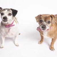 Adopt A Pet :: Salina - San Francisco, CA