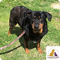 Adopt A Pet :: Butterball - Eighty Four, PA