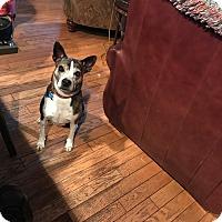 Adopt A Pet :: BRENNY - Odessa, FL