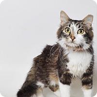 Adopt A Pet :: Hellbent - Fruit Heights, UT