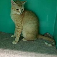 Adopt A Pet :: Chloe Girl - Maquoketa, IA