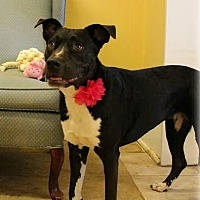 Adopt A Pet :: Esperanza - Houston, TX