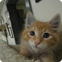 Adopt A Pet :: Nesbitt - Milwaukee, WI