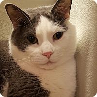 Adopt A Pet :: Stanley - Grayslake, IL