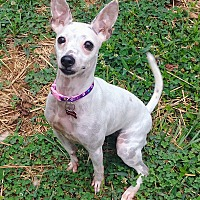 Adopt A Pet :: Minnie - Charlotte, NC