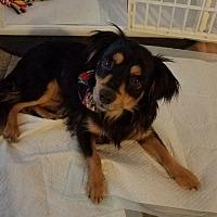 Adopt A Pet :: Hugo - Lake Forest, CA