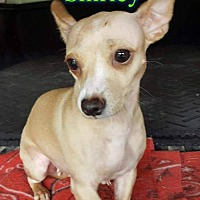 Adopt A Pet :: Shirley - Pensacola, FL