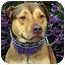 Photo 4 - German Shepherd Dog/Rhodesian Ridgeback Mix Dog for adoption in Berkeley, California - Nina