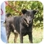 Photo 1 - Australian Shepherd/Shepherd (Unknown Type) Mix Dog for adoption in Lancaster, Kentucky - Black Foot