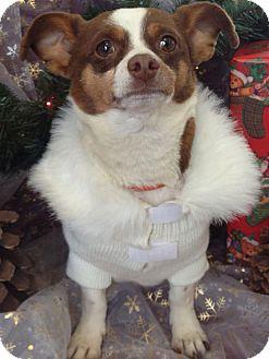 Chihuahua Mix Dog for adoption in Alamogordo, New Mexico - Sam
