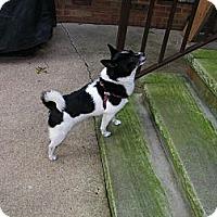 Adopt A Pet :: Misterio - Mt Gretna, PA