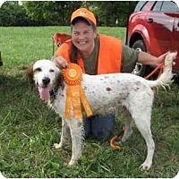 Adopt A Pet :: Heathcliff-ADOPTION PENDING - Columbus, OH