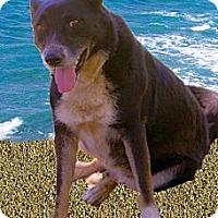 Adopt A Pet :: Missy mellow - Sacramento, CA