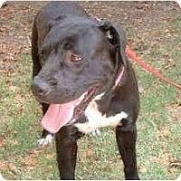 Adopt A Pet :: Tuxedo - Scottsdale, AZ