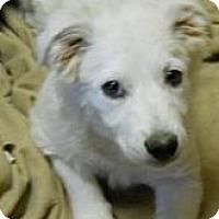 Adopt A Pet :: Barkley - dewey, AZ