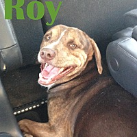 Adopt A Pet :: Roy - Orangeburg, SC