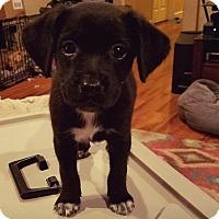 Adopt A Pet :: Thaddeus-Pending Adoption - Fredericksburg, VA