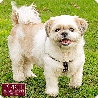 Adopt A Pet :: Momo - Marina del Rey, CA