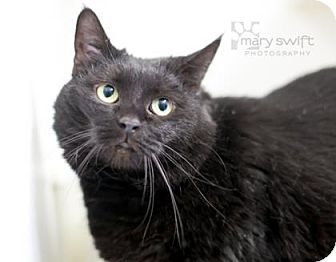Domestic Mediumhair Cat for adoption in Reisterstown, Maryland - Kitty
