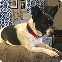 Adopt A Pet :: Katie - Lawrenceville, GA