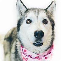 Adopt A Pet :: Aspen - New Castle, PA
