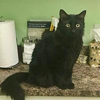 Adopt A Pet :: Ari - Fort Lauderdale, FL