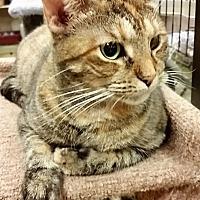 Adopt A Pet :: Harle(Quin) - Hallandale, FL