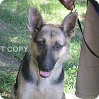 Adopt A Pet :: Denise - Rocky Mount, NC