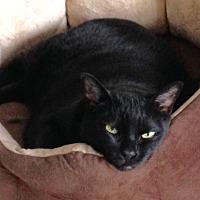 Adopt A Pet :: Amy - Toronto, ON