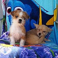 Adopt A Pet :: Jill - Santa Ana, CA