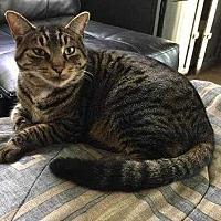 Adopt A Pet :: Parma - Muskegon, MI