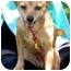 Photo 2 - Chihuahua Mix Dog for adoption in Poway, California - Lucie