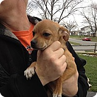 Adopt A Pet :: Pepe - Westerville, OH