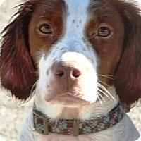 Adopt A Pet :: Lia - Peru, IN