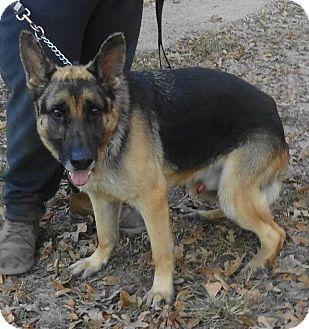 German Shepherd Dog Dog for adoption in SAN ANTONIO, Texas - CHIEF