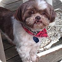 Adopt A Pet :: Ranger - Conway, AR