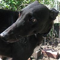 Adopt A Pet :: Frisco - Lexington, SC