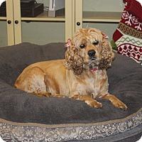 Adopt A Pet :: Bebe - Los Angeles, CA