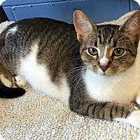 Adopt A Pet :: Lucy - Loogootee, IN