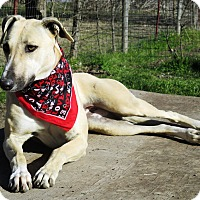 Adopt A Pet :: Cindy - Godley, TX