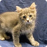 Adopt A Pet :: 17-c04-016 Hollis - Fayetteville, TN