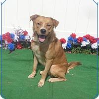 Adopt A Pet :: GATSBY - Marietta, GA