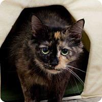 Adopt A Pet :: Cloe ( Cat ) - Lexington, TN