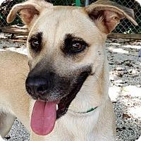 Adopt A Pet :: Rosa - Key Largo, FL