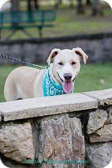 Labrador Retriever Mix Dog for adoption in New City, New York - Sky